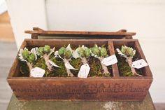 succulent boutonnieres  Photography by kateharrisonphotography.com, Floral Design by flowersbydenise.com