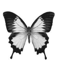 www.etola.net | Tekstiilitarra perhonen Moth Tattoo, Tribal Fusion, Shell Jewelry, Skin Art, Art World, Digital Image, Tatoos, Watercolor Paintings, Tatting