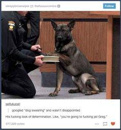 """Dog swearing"""
