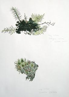 Drawn to Paint Nature: More lichens