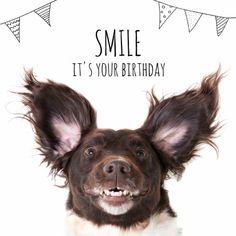verjaardagskaart / happy birthday - Happy Birthday Funny - Funny Birthday meme - - verjaardagskaart / happy birthday The post verjaardagskaart / happy birthday appeared first on Gag Dad. Happy Birthday Dog, Happy Birthday Pictures, Happy Birthday Messages, Happy Birthday Quotes, Birthday Fun, Birthday Greetings, Birthday Ideas, Smiling Dogs, Animal Birthday