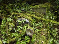 自然の治癒力は伊達じゃない!植物に飲み込まれていく廃墟や人工物の画像25枚