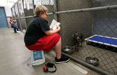 Hamilton kids calm shelter cats and dogs by reading to them - Brayden Rogers and Grace Kravik spent part of their Wednesday afternoon reading to dogs at the Bitter Root Humane Association shelter in Hamilton. The two were participating in one of the many programs offered by the Keystone to Discovery After School program.