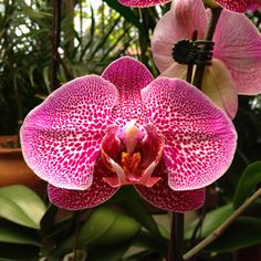 Gorgeous orchid from Venezuela.