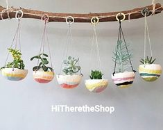 Hanging Succulents, Succulent Pots, Hanging Planters, Succulents Garden, Rainbow Succulent, Coconut Shell Crafts, Rainbow Candy, Diy Inspiration, House Plants Decor