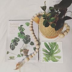 • GREEN • Green Pot Belly Fig, beautiful book about all things green, and a print of a green monstera leaf. 👌