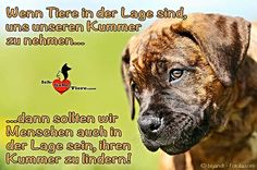 Doggy Petitions - Tierschutz / Animal Welfare Seite 3
