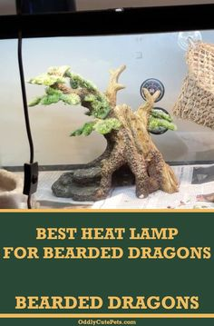 Top 4 Best Heat Lamps For Bearded Dragons Bearded Dragon Tank Setup, Bearded Dragon Heat Lamp, Bearded Dragon Lighting, Bearded Dragon Habitat, Bearded Dragon Funny, Guinea Pig Toys, Guinea Pig Care, Reptile Heat Lamp, Reptile Cage