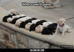 The Keys Are Alive, With The Sound Of Tiny Puppies