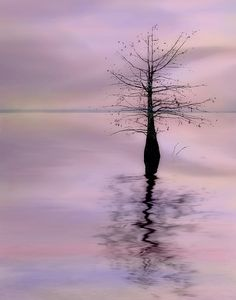 ✯ Lonely Cypress