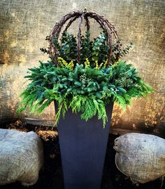 Winter Planters containing Lit grapevine wrapped spheres, Citrus Eucalyptus, Lime berry spray and lit mixed greens. By: Andrew VanHarken Christmas Urns, Outdoor Christmas Decorations, Winter Christmas, Holiday Decor, Xmas, Holiday Ideas, Fall Decor, Winter Container Gardening, Container Plants