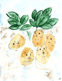 """sparkles-drawing-den: """" a bountiful harvest of potato-pigs """""""