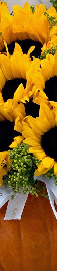 Sunflower Garden, Sunflower Fields, Pin Logo, Gladiolus, Floral Fashion, Love And Light, Sunflowers, Peonies, Beautiful