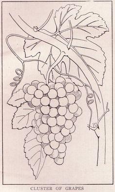 Cluster of Grapes ~ public domain illustration, Grape Drawing, Realistic Flower Drawing, Vine Drawing, Flower Drawing Images, Flower Line Drawings, Art Drawings, Veggie Art, Plaster Art, Diy Artwork