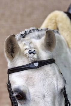Braid with Bows! Gorgeous heart bridle and braided mane with bows.kinda looks like one of my horses at my farm,Irish All The Pretty Horses, Beautiful Horses, Animals Beautiful, Horse Hair Braiding, Horse Mane Braids, Horse Clipping, Horse Grooming, Dressage Horses, Horse Pictures
