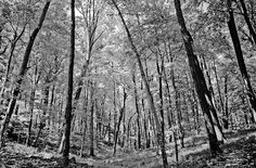 ice age trail wisconsin | Ice Age trail in Kettle Moraine Forest in central Wisconsin