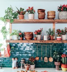 vivid blue backsplash with beautiful plants