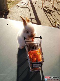 Los conejos son unos animalitos adorables, solo con pensar en ellos, una gran sonrisa asoma en la cara. Tan suaves, delicados, y con una carita que ll...