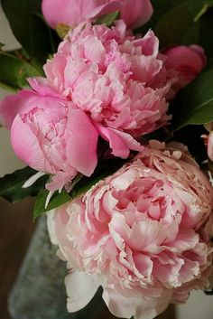 I love pink peonies Romantic Flowers, All Flowers, Amazing Flowers, Fresh Flowers, Beautiful Flowers, Wedding Flowers, Peony Flower, My Flower, Style Floral
