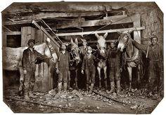 miners using Mules /Pennsylvania