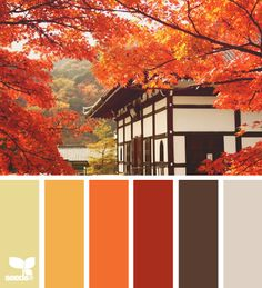 Home color palette warm design seeds 36 ideas Orange Color Palettes, Colour Pallette, Color Palate, Color Combinations, Design Seeds, Pantone, Colour Board, Color Swatches, Color Theory