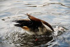 Diving, Photography, Animals, Photograph, Animales, Scuba Diving, Animaux, Fotografie, Photoshoot