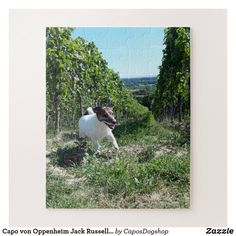 Shop Capo von Oppenheim Jack Russell Terrier, Dog Jigsaw Puzzle created by CaposDogshop. Summer Dog, Make Your Own Puzzle, Custom Gift Boxes, Puzzles For Kids, Animal Skulls, Jack Russell Terrier, Happy Dogs, High Quality Images, Jigsaw Puzzles