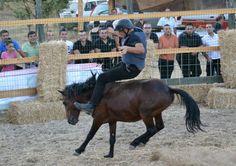 Un cavaliere in groppa ad uno splendido esemplare di cavallino della Giara