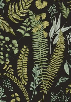 Discover recipes, home ideas, style inspiration and other ideas to try. Green Leaf Wallpaper, Fern Wallpaper, Botanical Wallpaper, Botanical Illustration, Botanical Prints, Botanical Bathroom, Wallpaper Accent Wall Bathroom, Wallpaper Aesthetic, Green Home Decor