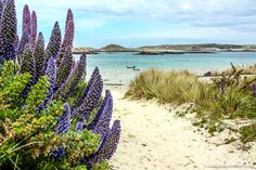 Beautiful Places in England - 19 Incredible Places You Should See Cool Places To Visit, Places To Travel, Travel Destinations, Tresco Abbey Gardens, Scilly Island, Beautiful Places In England, Uk Beaches, Holiday Places, Travel