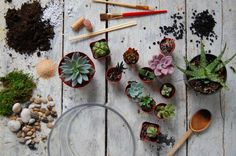 How to Make a Terrarium (and Keep it Alive): Green thumb not required. #food52