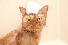 """Garfi's """"Bath Day"""" Face"""