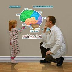 Simplified Brain Sticky Anatomy Wall Chart - Labeled