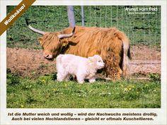 Kunst vom Feld: Wollknäuel – www.kunstvomfeld.de