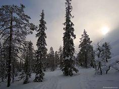 Il richiamo dell'aurora boreale: perdersi e ritrovarsi nella remota Lapponia