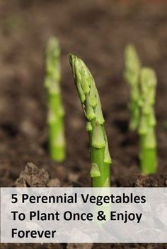 5 Perennial Vegetables to Plant. I love perennials, especially since this gardening thing is not a strength of mine.