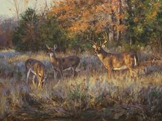He has garnered praise for his paintings of North American wildlife and has been featured in numerous publications. Specialty in whitetail painting Wildlife Paintings, Wildlife Art, Deer Drawing, Charcoal Sketch, Deer Print, Southwest Art, Commercial Art, Fine Art Auctions, Art Studies