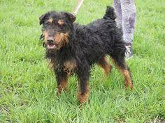 Gienio, pozytywnie zakręcony, przyjazny pies dla przyjaznego człowieka. :)