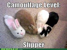Camo bunny