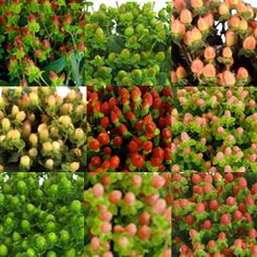 FiftyFlowers.com - Hypericum Berries Assorted Colors