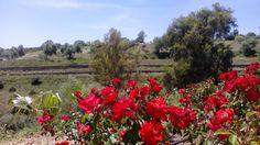 Hornachuelos (Córdoba) es tierra de flores... y de miel!