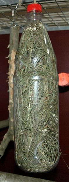Drill or cut a big 'feeding' hole in the bottom and a hanging hole in the lid then fill it with hay or paper shred plus seeds and treats throughout!: