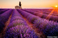 Provence, France: the lavender awaits.