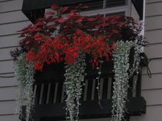 My summer window boxes