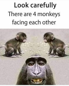 Guess the monkey. - Funny Monkeys - Funny Monkeys meme - - Guess the monkey. Monkeys Funny Guess the monkey. The post Guess the monkey. appeared first on Gag Dad. The post Guess the monkey. appeared first on Gag Dad. Funny School Jokes, Some Funny Jokes, Funny Quotes For Kids, Crazy Funny Memes, Really Funny Memes, Funny Animal Memes, Funny Animal Pictures, Funny Facts, Funny Kids
