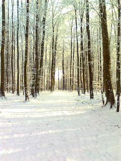 Forêt de Soigne sous la neige