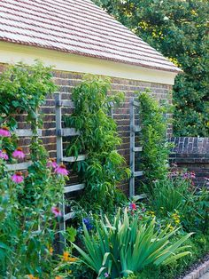 Get twice the flowers and vegetables in your smallgarden by adding a trellis or low fence behind every planting bed. That way, you can grow vine crops vertically so they don't sprawl over their plant neighbors. In this narrow garden bed, a trio of rustic wooden trellises support flowering vines at the back of the perennial border./