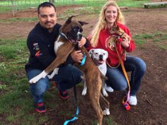 Comet got his wish on Saturday & went home with the Morales family! They wanted a young and energetic boy and NWBR thought the Morales family would be perfect for Comet. Comet's new mom Katrina & new dad Roger thought he was pretty great right from the start. He also hit it off with his boxer fur sister Rosa & chihuahua fur brother Guerito. Comet will be living his new life in Walla Walla, WA with his forever family. Thank you Morales family for adopting & welcome to the NWBR family!
