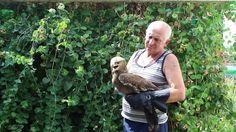 Экологический туризм от А до Я №24 Хищные птицы. Орел