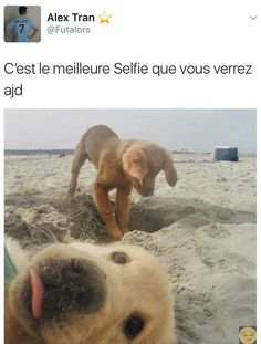 Pin by dogs on Hunde Funny Animal Memes, Cute Funny Animals, Funny Cute, Cute Dogs, Animals And Pets, Baby Animals, Boruto, Great Memes, Image Fun